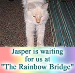 Waiting at the 'Rainbow Bridge' - Jasper